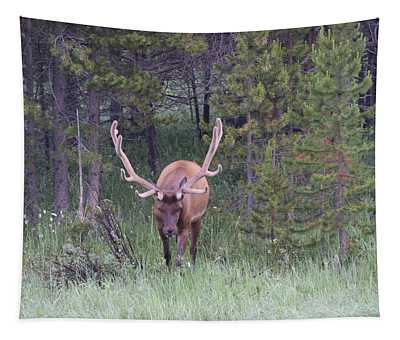 Bull Elk Rmnp Co Tapestry