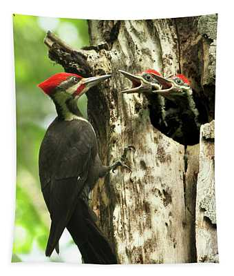 Male Pileated Woodpecker At Nest Tapestry