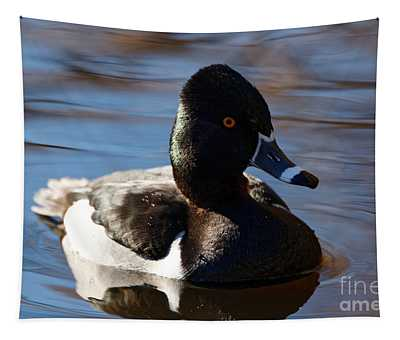 Male Ring-necked Duck Tapestry