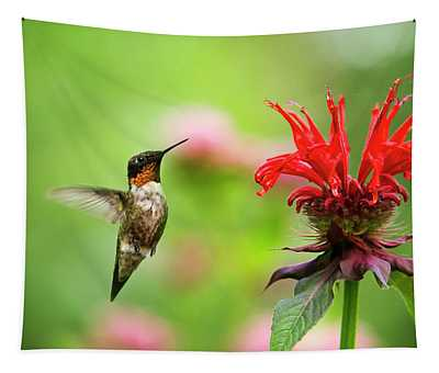 Male Ruby-throated Hummingbird Hovering Near Flowers Tapestry
