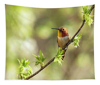 Male Rufous Hummingbird On A Branch Tapestry