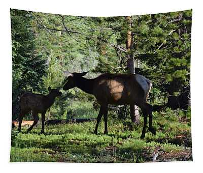 Elk Calf - Mother Rmnp Co Tapestry