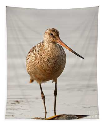Marbled Godwit - Beauty Tapestry