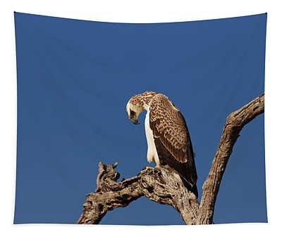Martial Eagle Tapestry
