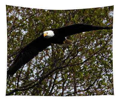 Mature Bald Eagle Tapestry