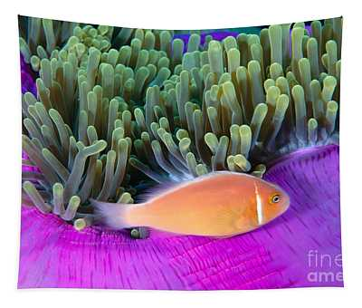 Micronesia, Marine Life Tapestry