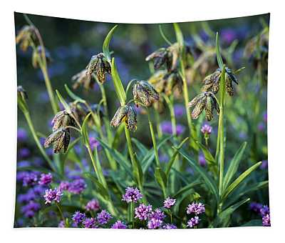 Mission Bells And Plectritis Tapestry