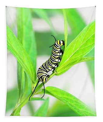Monarch Caterpillar Tapestry