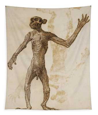 Monkey Standing, Anterior View Tapestry
