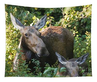 Moose - White Mountains New Hampshire  Tapestry