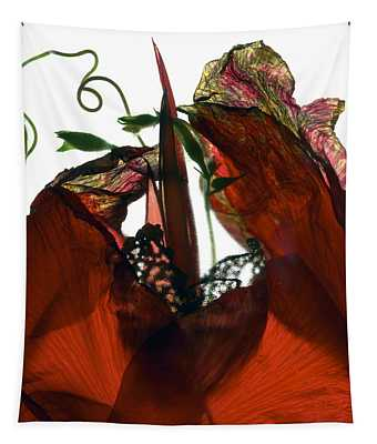 Morning Glory Canna Red Tapestry