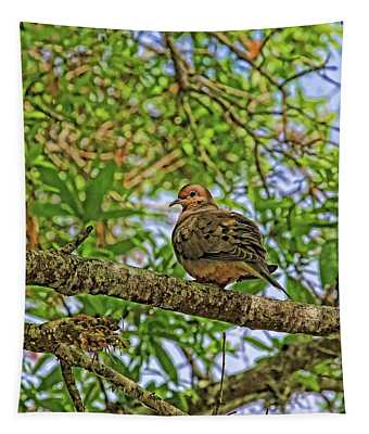 Morning Mourning Dove Tapestry