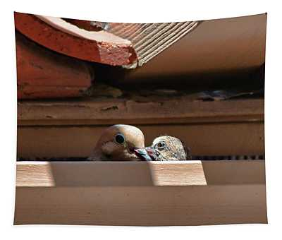 Mourning Dove Baby And Mom In Rain Gutter II  Tapestry