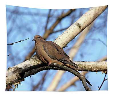 Mourning Dove In Birch Tree Tapestry