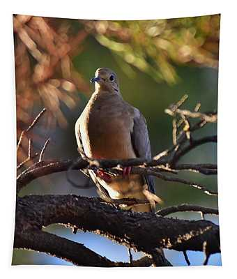 Mourning Dove In Late Afternoon Shadow 1 Tapestry