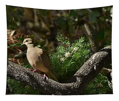 Mourning Dove In Late Afternoon Shadow 2 Tapestry
