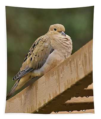 Mourning Dove In The Rain 1 Tapestry