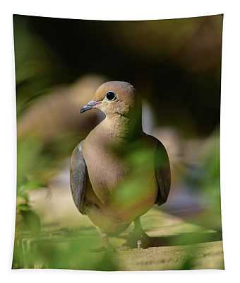 Mourning Dove Portrait  Tapestry
