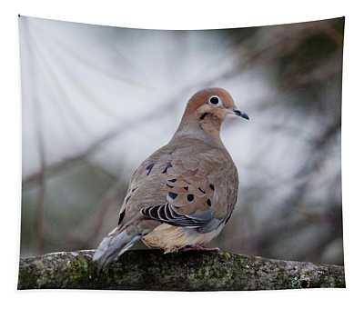 Mourning Dove Sitting Pretty Tapestry