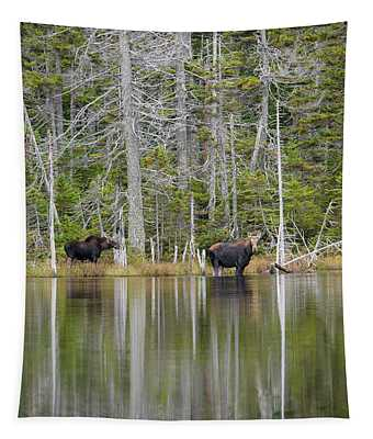Nancy Pond - White Mountains New Hampshire Usa Tapestry