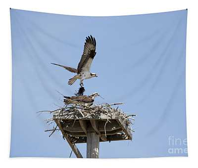 Nesting Osprey In New England Tapestry