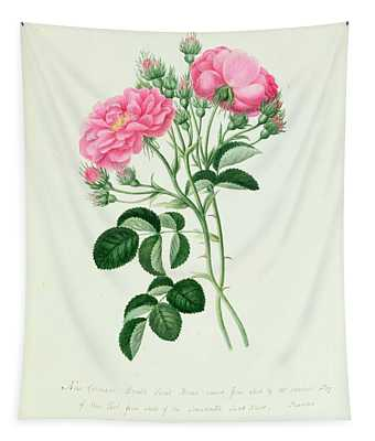 New Crimson Double Sweet Briar Of New York Tapestry