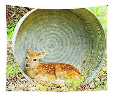 Newborn Fawn Finds Shelter In An Old Washtub Tapestry