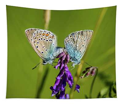 Northern Blue's Mating Tapestry
