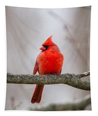 Northern Cardinal 2016 Tapestry