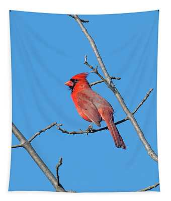 Northern Cardinal Dsb0272 Tapestry
