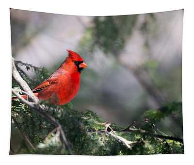Northern Cardinal Red Tapestry