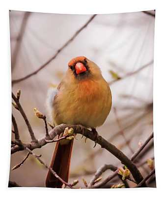 Northern Female Cardinal Pose Tapestry
