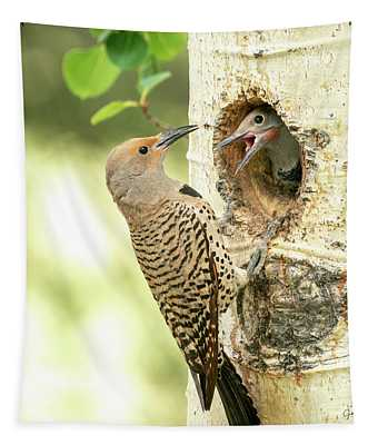 Northern Flicker Feeding Baby Tapestry