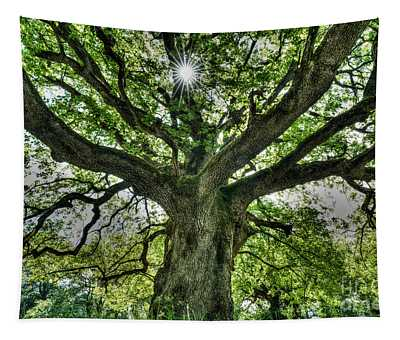 Oak And Rays Tapestry