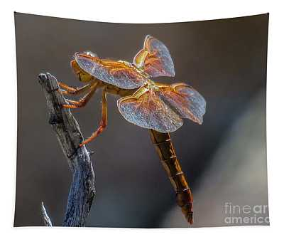 Dragonfly 2 Tapestry