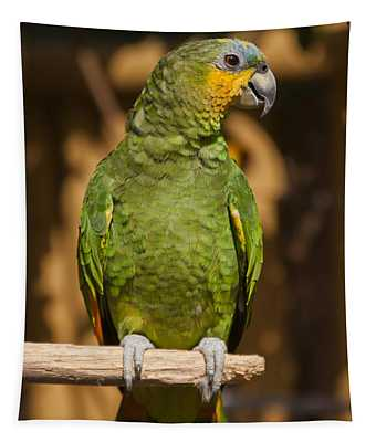 Orange-winged Amazon Parrot Tapestry