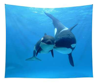 Orca Orcinus Orca Mother And Newborn Tapestry