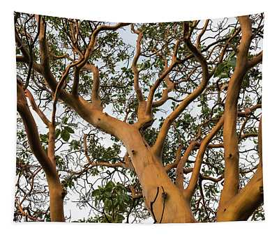 Pacific Madrone Trees Tapestry
