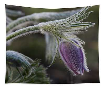 Pasque Flower Tapestry
