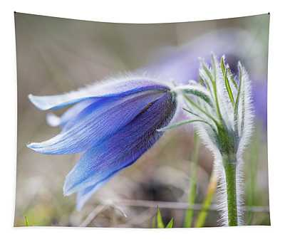 Pasque Flower's Silver Grey Hair Tapestry