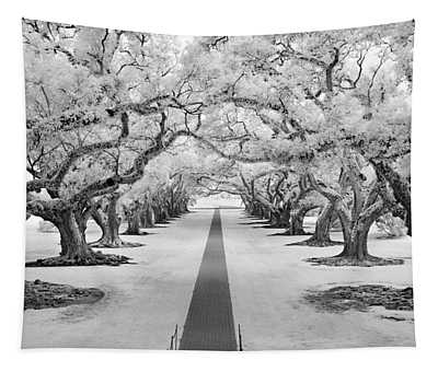 Path Of Dreams  Tapestry