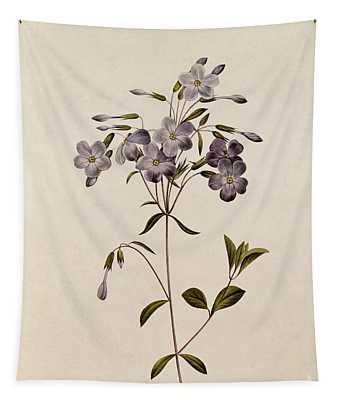 Phlox Reptans Tapestry