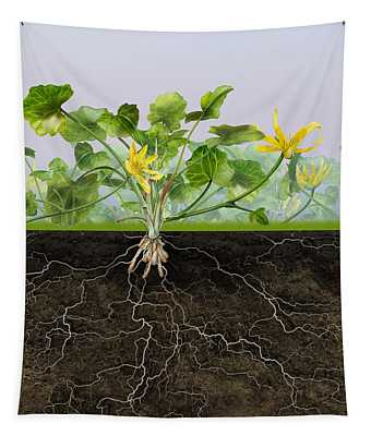 Pilewort Or Lesser Celandine Ranunculus Ficaria - Root System -  Tapestry
