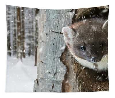 Pine Marten In Tree In Winter Tapestry