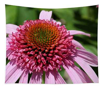 Pink Coneflower Close-up Tapestry