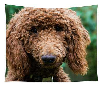 Poodle Pup Tapestry