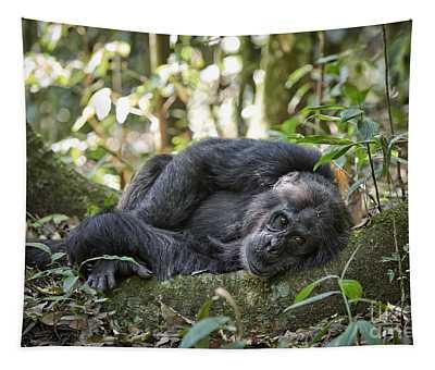 portrait of Common chimpanzee 8 Tapestry