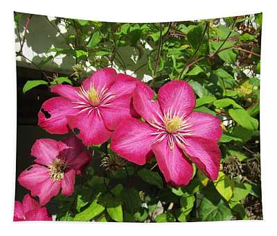 Purple Clematis  Tapestry
