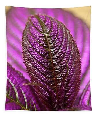 Purple Coleus Tapestry