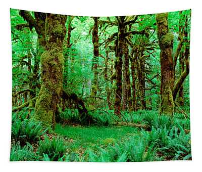 Rain Forest, Olympic National Park Tapestry